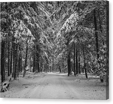 Road To Winter Canvas Print by Brian Young