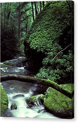 Roaring Fork Creek  Canvas Print by Cyril Furlan