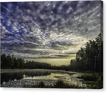 Roberts Branch Pine-lands Landscape Canvas Print by Louis Dallara