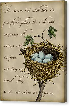 Robin's Nest Canvas Print by Christy Beckwith