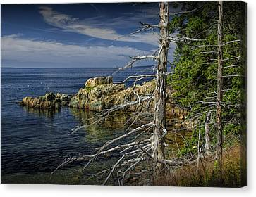 Rock Formations And Trees On The Shoreline In Acadia National Park Canvas Print by Randall Nyhof