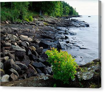 Rocks And Trees Along Lake Superior Canvas Print by Panoramic Images