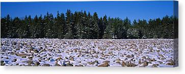 Rocks In Snow Covered Landscape Canvas Print by Panoramic Images