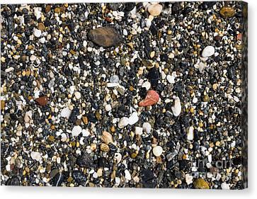 Rocks On The Beach Canvas Print by Steven Ralser