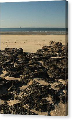 Rocky Beach Canvas Print by Alicia Knust