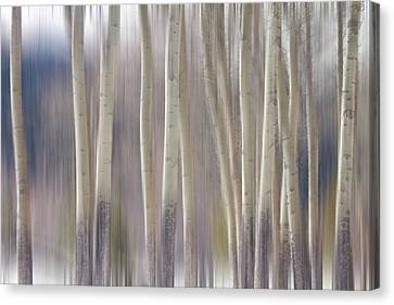 Rocky Mountain Winter Aspen Tree Forest Dream Canvas Print by James BO  Insogna