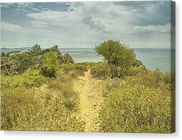 Rocky Path To The Sea Canvas Print by Georgia Fowler