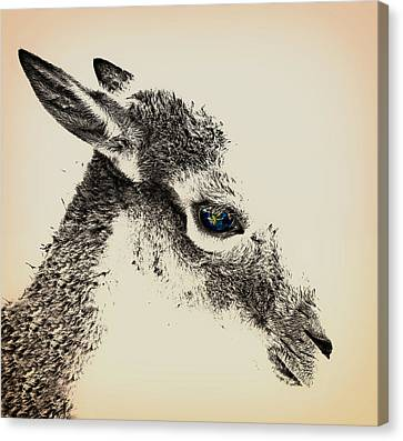 Roe Deer Drawing Canvas Print by Mountain Dreams