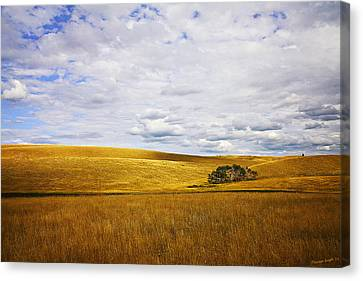 Rolling Prairie Canvas Print by Theresa Tahara