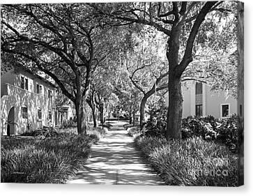 Rollins College Landscape Canvas Print by University Icons