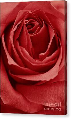 Romance IIII Canvas Print by Angela Doelling AD DESIGN Photo and PhotoArt