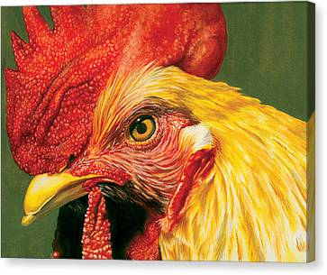Rooster Canvas Print by Kelly Gilleran