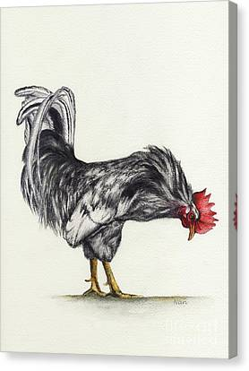 Rooster Canvas Print by Nan Wright