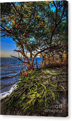 Rooted In Truth Canvas Print by Marvin Spates