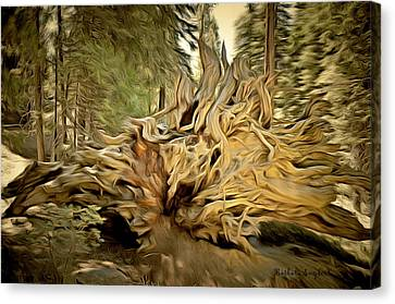 Roots Of A Fallen Giant Sequoia Canvas Print by Barbara Snyder