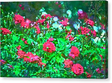 Rose 201 Canvas Print by Pamela Cooper