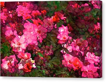 Rose 202 Canvas Print by Pamela Cooper