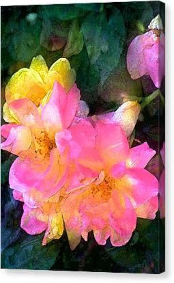 Rose 211 Canvas Print by Pamela Cooper