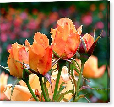 Rose Bunch Canvas Print by Rona Black