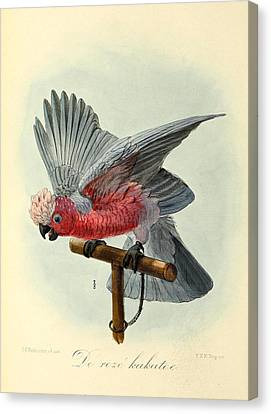 Rose Cockatoo Canvas Print by J G Keulemans