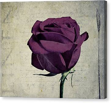 Rose En Variation - S09bt10 Canvas Print by Variance Collections