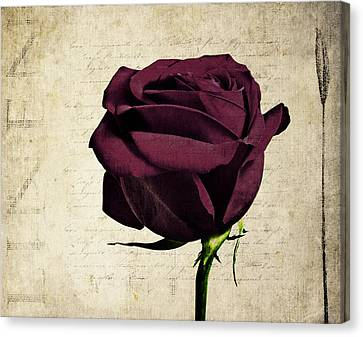 Rose En Variation - S11bt10b Canvas Print by Variance Collections