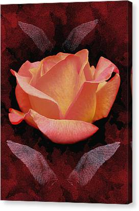 Rose From Angels Digital Art Canvas Print by Costinel Floricel