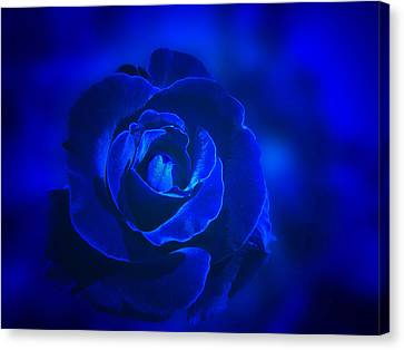 Rose In Blue Canvas Print by Sandy Keeton