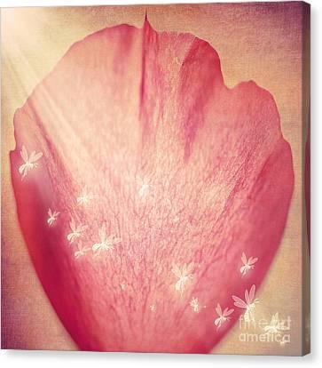 Rose Petal Canvas Print by Svetlana Sewell