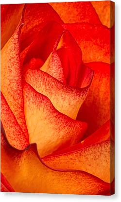Rose Petals Canvas Print by Dawn Currie