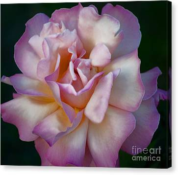 Rose Petals Straight From My Heart Canvas Print by Gwyn Newcombe