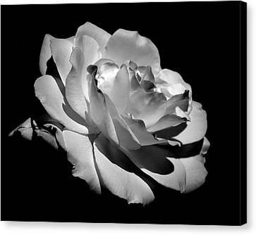 Rose Canvas Print by Rona Black