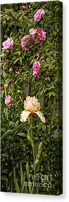 Rose Scent Carries One Away Canvas Print by Marcia L Jones