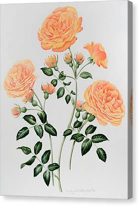 Rose St Richard Of Chichester  Canvas Print by Sally Crosthwaite