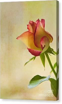 Rose Canvas Print by Veikko Suikkanen
