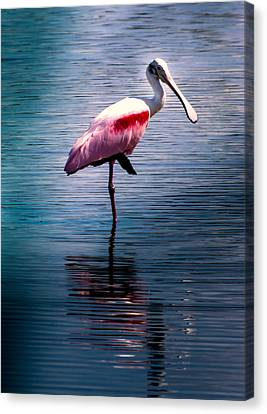 Roseate Spoonbill Canvas Print by Karen Wiles