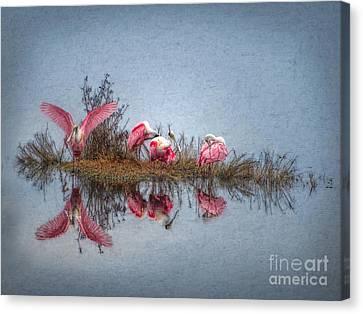 Roseate Spoonbills At Rest Canvas Print by Lianne Schneider