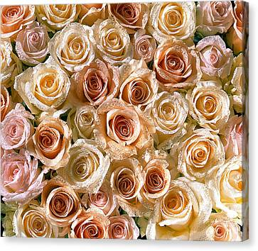 Roses 1 Canvas Print by Mauro Celotti