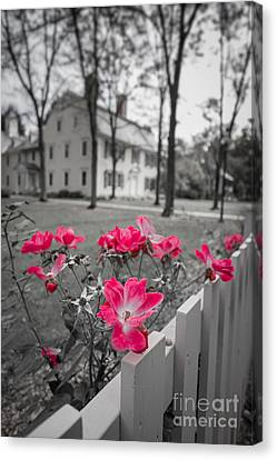 Roses Along A Picket Fence Deerfield Massachuesetts Canvas Print by Edward Fielding