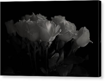 Roses Canvas Print by Mario Celzner