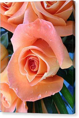 Roses Canvas Print by Paula Brown