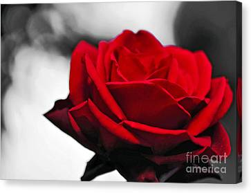 Rosey Red Canvas Print by Kaye Menner