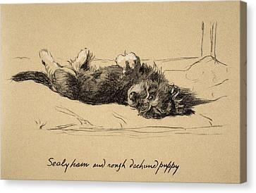 Rough Daschund Puppy Detail, 1930 Canvas Print by Cecil Charles Windsor Aldin