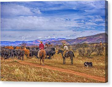 Rounding Up Cattle In Cornville Arizona Canvas Print by Priscilla Burgers