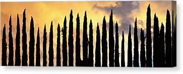 Row Of Cypress Trees Silhouetted Canvas Print by Panoramic Images