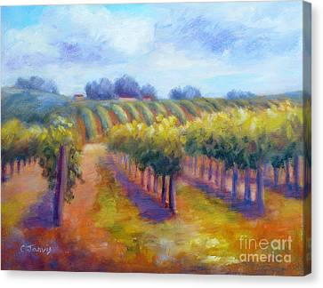 Rows Of Vines Canvas Print by Carolyn Jarvis
