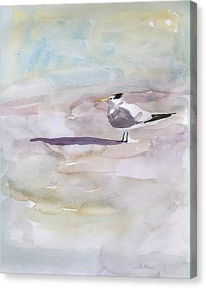 Royal Tern  Canvas Print by Julianne Felton
