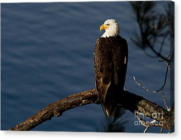 Royalty Canvas Print by Beve Brown-Clark Photography
