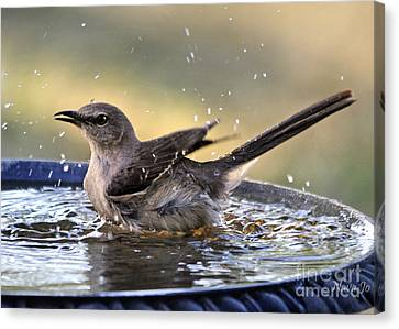 Rub-a-dub-dub Mockingbird Canvas Print by Nava Thompson