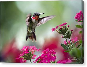 Ruby Garden Jewel Canvas Print by Christina Rollo